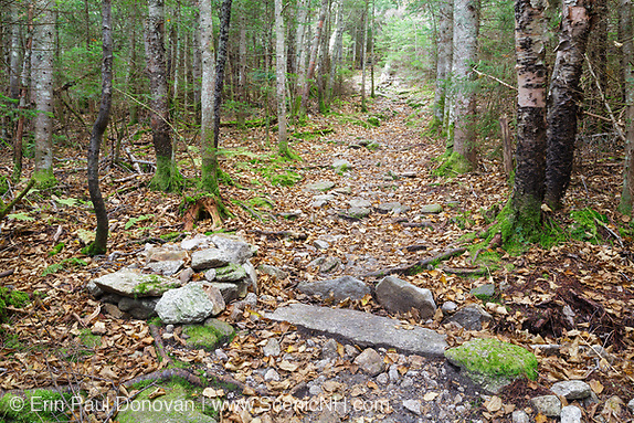 Mt Tecumseh Trail in the White Mountains, New Hampshire.
