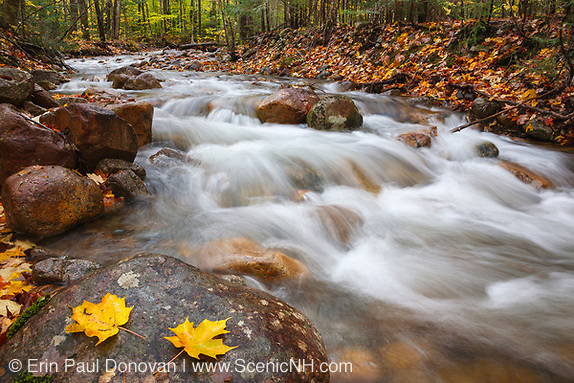 Hellgate Brook in the Pemi Wilderness of Franconia, New Hampshire.
