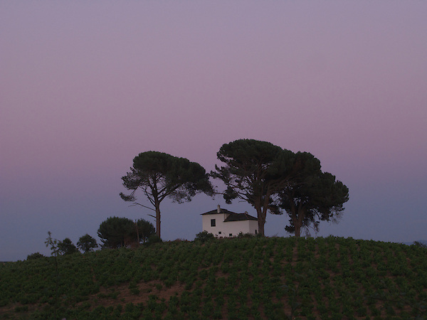 Set on a hilltop this whitewashed Spanish house seemed perfect amongst the trees. As the sun set, the warm evening made it an idillic scene on the Way of Saint James. (Richard McCaig)