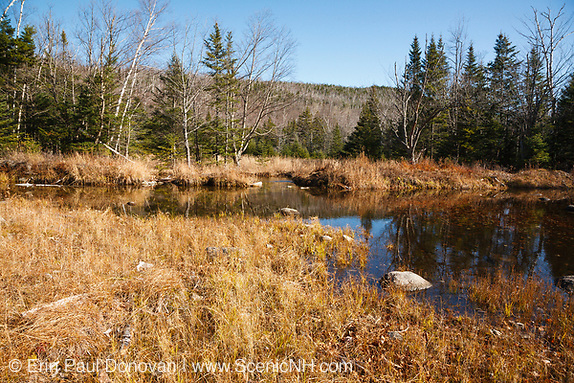 "Sandwich Wilderness - Wetlands area along Flat Mountain Pond Trail in Waterville Valley, New Hampshire. This trail follows the old Beebe River Railroad line and this area was referred to as the ""Horseshoe"", which was a very sharp turn along the railroad."