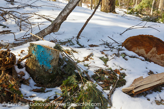Tree stump in Unit 44 of the Kanc 7 Timber Harvest logging project along the Kancamagus Scenic Byway in the White Mountains of New Hampshire.