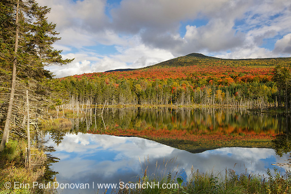 Reflection of autumn foliage on Mount Deception in a small pond along Old Cherry Mountain Road in Carroll, New Hampshire USA during the autumn months.