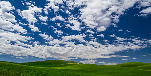 The rolling hills of the Palouse in Southeastern Washington on a warm late Spring day with a bright blue, cloud-filled sky. (Clint Losee)