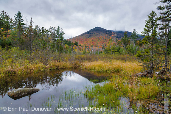 Wetlands area along the Franconia Brook Trail in the Pemigewasset Wilderness of New Hampshire during the autumn months. The southern end of Owls Head is off in the distance. The Camp 9 spur line at Camp 9 of the East Branch & Lincoln Railroad (1893-1948) traveled through this wetlands area. The spur started at Camp 9, went through these wetlands, crossed Franconia Brook, and ended in a landing / work area just beyond the brook crossing.