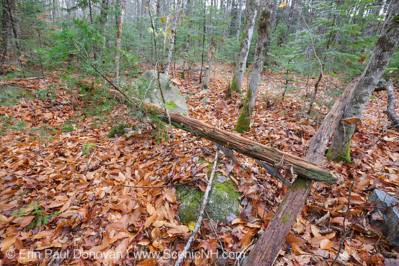 Artifact (utility pole) near logging Camp 16 along the East Branch & Lincoln Railroad (1893-1948) in the Pemigewasset Wilderness in Lincoln, New Hampshire. Seen here in 2013, this utility pole was still standing in 2011.