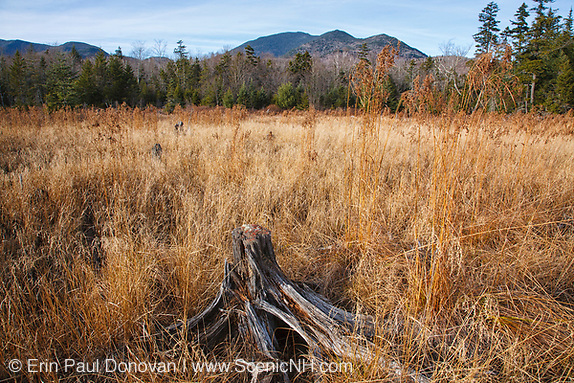 Wetlands area during the autumn months along the Sawyer River Trail in Livermore, New Hampshire USA. The Sawyer River Trail travels along the old Sawyer River Railroad logging line. Mount Carrigain can be seen in the background.