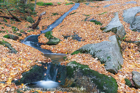 Autumn leaf drop along Clough Mine Brook in Kinsman Notch of Woodstock, New Hampshire USA during the autumn months.