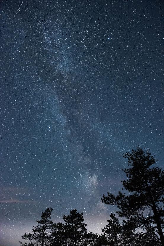 Milky Way in the night sky with several pine tree tops, Ķemeri National Park, Latvia Ⓒ Davis Ulands | davisulands.com (Davis Ulands/Ⓒ Davis Ulands | davisulands.com)