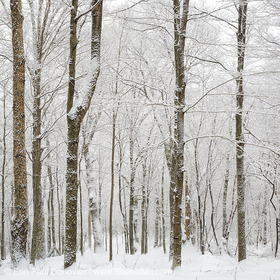 This is the image that represents the month of November in the 2017 White Mountains New Hampshire calendar. It shows Lafayette Brook Scenic Area in Franconia, New Hampshire covered in snow after a snow storm. The calendar can be purchased here: http://bit.ly/220sKru