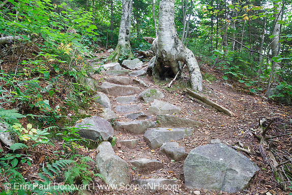 Rock steps along Greenleaf Trail in the White Mountains of New Hampshire USA during the summer months. A path has formed on the right hand side to avoid the stone steps.
