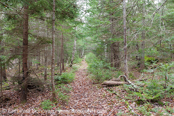 White Mountains, March history, Flat Mountain Pond Trail, near Flat Mountain Ponds, in Waterville Valley, New Hampshire. This trail follows the old logging railroad bed of the Beebe River Railroad.