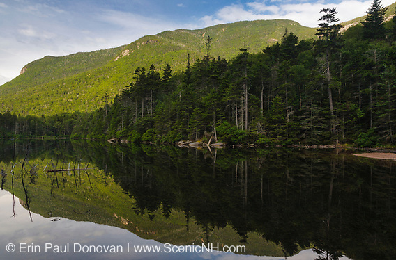 Greeley Ponds Scenic Area - Reflection of forest and mountain in Upper Greeley Pond in the White Mountains, New Hampshire. This is a great short hike to two beautiful ponds.