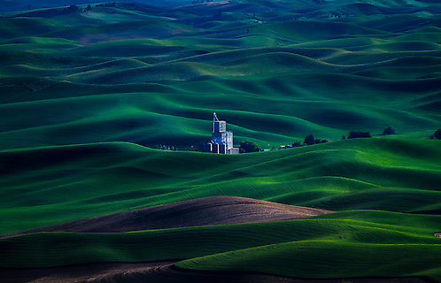 The rolling green hills of the Palouse Region in Eastern Washington provide endless views from Steptoe Butte.  Here a loan grain storage center sits among the flowing green country hillside. (Clint Losee)