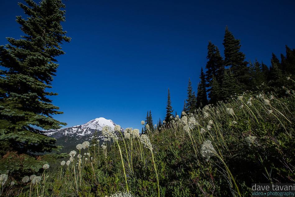 Mt. Rainier rises above the Bear Grass along the Naches Peak Loop Trail. (Dave Tavani)