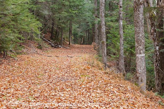 Sawyer River Logging Railroad - Sawyer River Trail which follows the old Sawyer River Logging Railroad line in Livermore, New Hampshire USA.