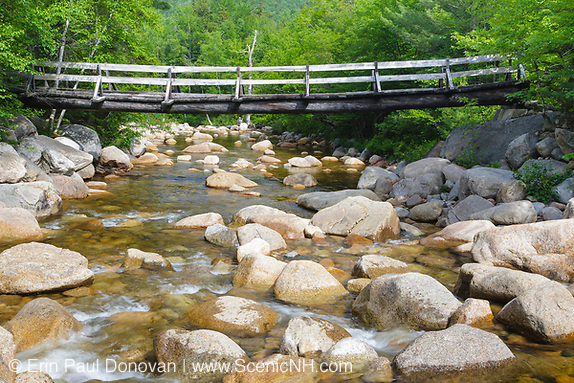 Side view of footbridge along the Thoreau Falls Trail, at North Fork Junction, in the Pemigewasset Wilderness of Lincoln, New Hampshire. This bridge is supported by two large white pines and crosses the East Branch of the Pemigewasset River.
