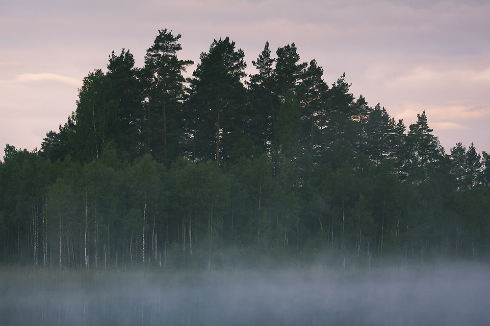 Fog covered lake in early summer morning | Kurzeme, Latvia (Davis Ulands/Ⓒ Davis Ulands | davisulands.com)
