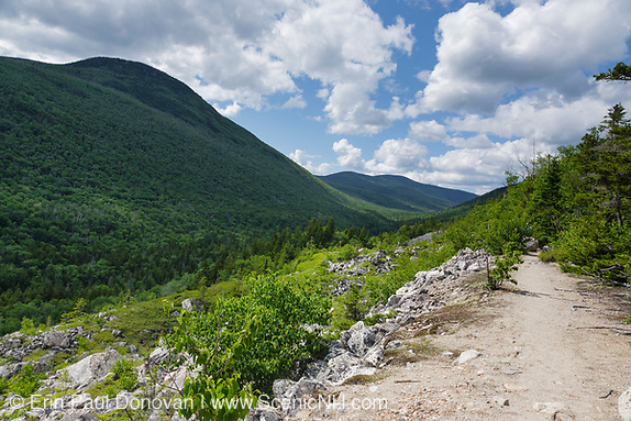 June history, Zealand Notch from along the Appalachian Trail (Ethan Pond Trail) in the New Hampshire White Mountains during the summer months.