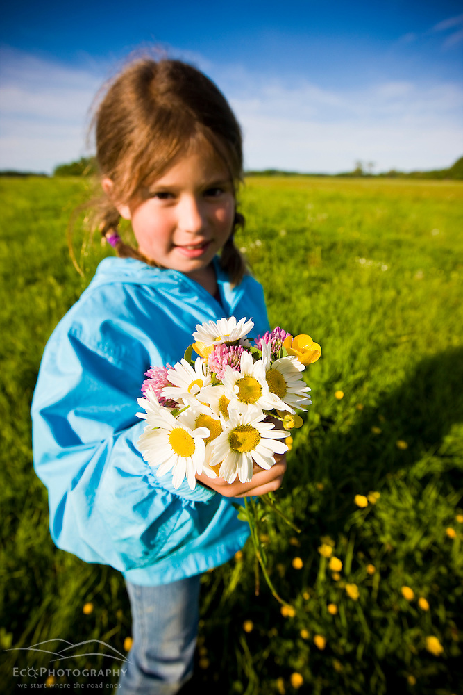 A girl (age 8) picks a bouquet of field flowers in a hay field on a farm in Ipswich, Massachusetts. (Jerry and Marcy Monkman)