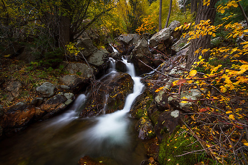 A small stream rushes through the hillside in Big Cottonwood Canyon near Salt Lake City, Utah in the Fall.  Fall colors envelope the area adding a splash of color. (Clint Losee)