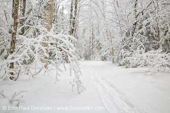 Lincoln Woods Trail in Lincoln New Hampshire USA during the winter months, after a snow storm. This trail follows the old East Branch & Lincoln Railroad.