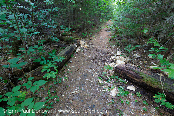 Fresh Axe work along Franconia Brook Trail in the Pemigewasset Wilderness of New Hampshire during the summer months.Because the Pemi Wilderness is a designated wilderness trail work has to be done with hand tools and non-motorized equipment. This trail follows the Franconia Branch of the old East Branch & Lincoln Railroad.