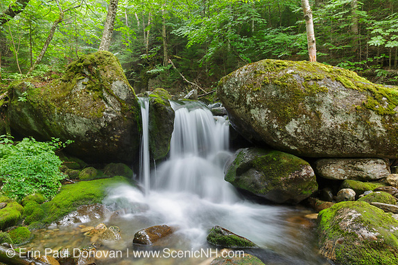 A top section of Cascade #8 along Cold Brook in Low and Burbank's Grant, New Hampshire during the summer months.