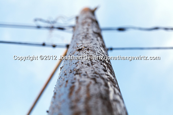 A close view looking up a wooden utility or telephone pole. (© 2012 Jonathan Gewirtz / jonathan@gewirtz.net)