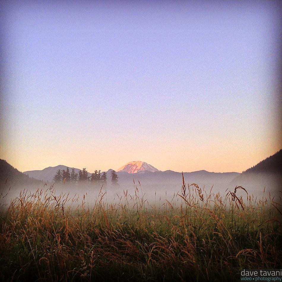 Morning alpenglow illuminates Mt. Rainier as seen from a misty field in Enumclaw, Washington. (Dave Tavani)