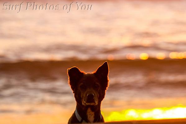 $45.00, 15 November 2018, Dee Why, North Narrabeen, Surf Photos of You, @surfphotosofyou, @mrsspoy ($45.00, 15 November 2018, Dee Why, North Narrabeen, Surf Photos of You, @surfphotosofyou, @mrsspoy)