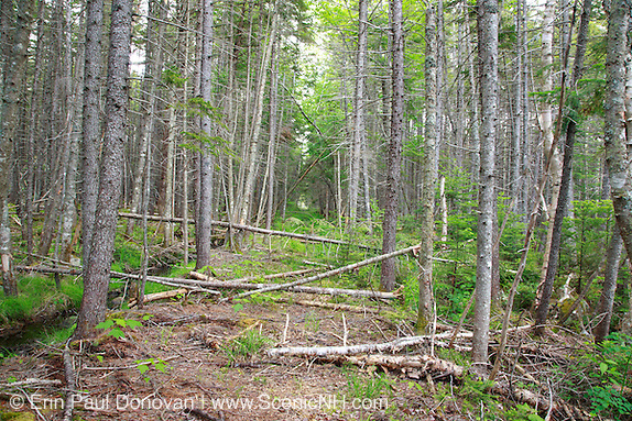Pemigewasset Wilderness - Remnants of the East Branch & Lincoln Railroad bed in the area of Stillwater Junction in Lincoln, New Hampshire USA. This section of railroad led to Camp 19.  This was an logging railroad, which was in operation from 1893 - 1948.