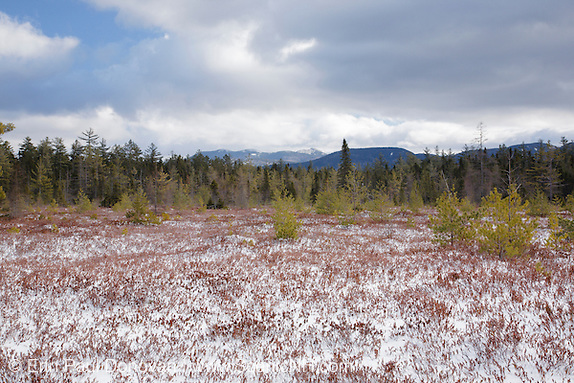 "Peatland community near Church Pond in the White Mountains, New Hampshire USA.  This area is referred to as ""the bog"" and was part of the Swift River Railroad era, which was an logging railroad in operation from 1906 - 1916. Mount Chocorua is way off in the distance."