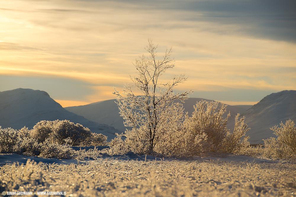 North Iceland (Einar Gudmann)