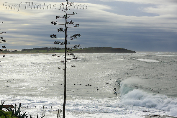 $5.00, 22 May 2020, Dee Why Point, Surf Photos of You, @surfphotosofyou, @mrsspoy $45.00, 22 May 2020, Dee Why Point, Surf Photos of You, @surfphotosofyou, @mrsspoy (SPoY)