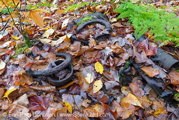 Picking up trash, artifacts (horseshoes) at an old logging camp along the abandoned Woodstock & Thornton Gore Railroad in Livermore, New Hampshire