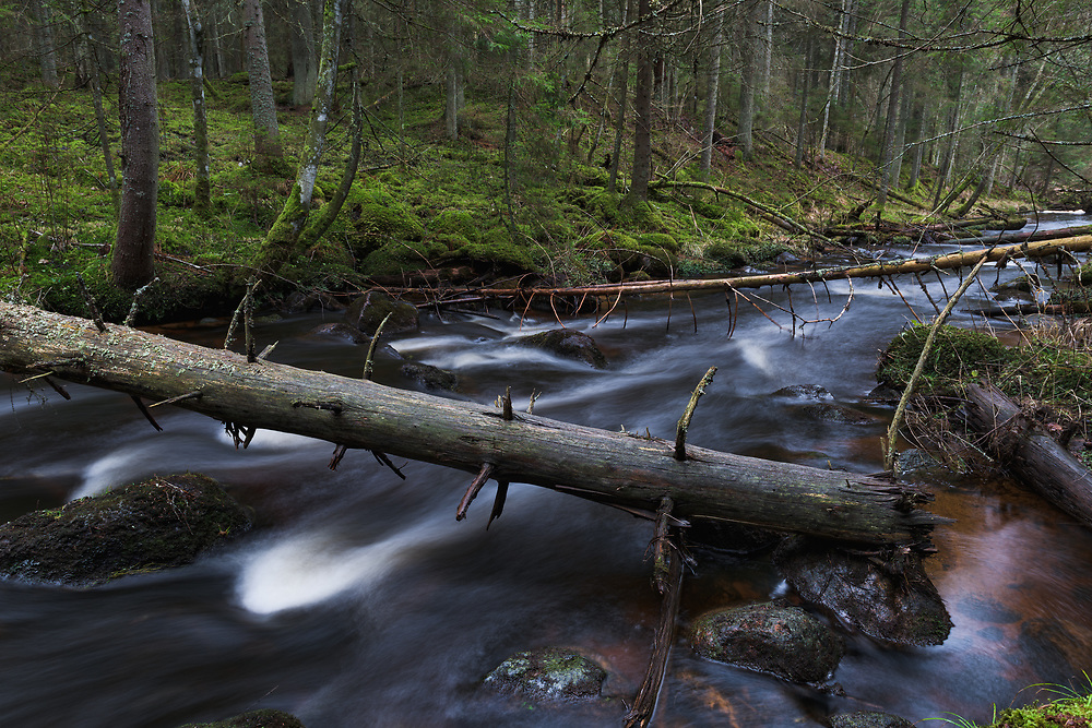 Long exposure photograph of fallen spruces (Picea abies) over River Līgatne and the mossy spruce forests around it, near Nītaure, Latvia Ⓒ Davis Ulands | davisulands.com (Davis Ulands/Ⓒ Davis Ulands | davisulands.com)