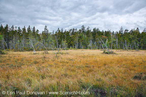 Wetlands area along an old sled road off the old East Branch & Lincoln Logging Railroad in the Shoal Pond Valley of Lincoln, New Hampshire USA. The East Branch & Lincoln Railroad was a logging railroad that operated from 1893-1948.