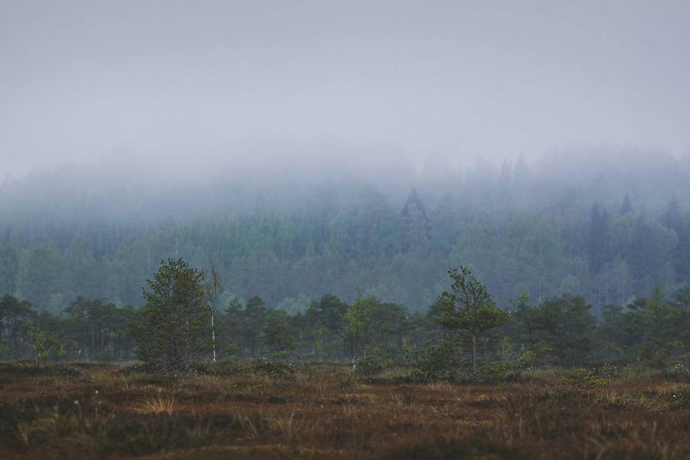 "Before sunrise in foggy and cloudy morning in raised bog looking towards hill covered with forest, nature reserve ""Augstroze"", Vidzeme, Latvia Ⓒ Davis Ulands 