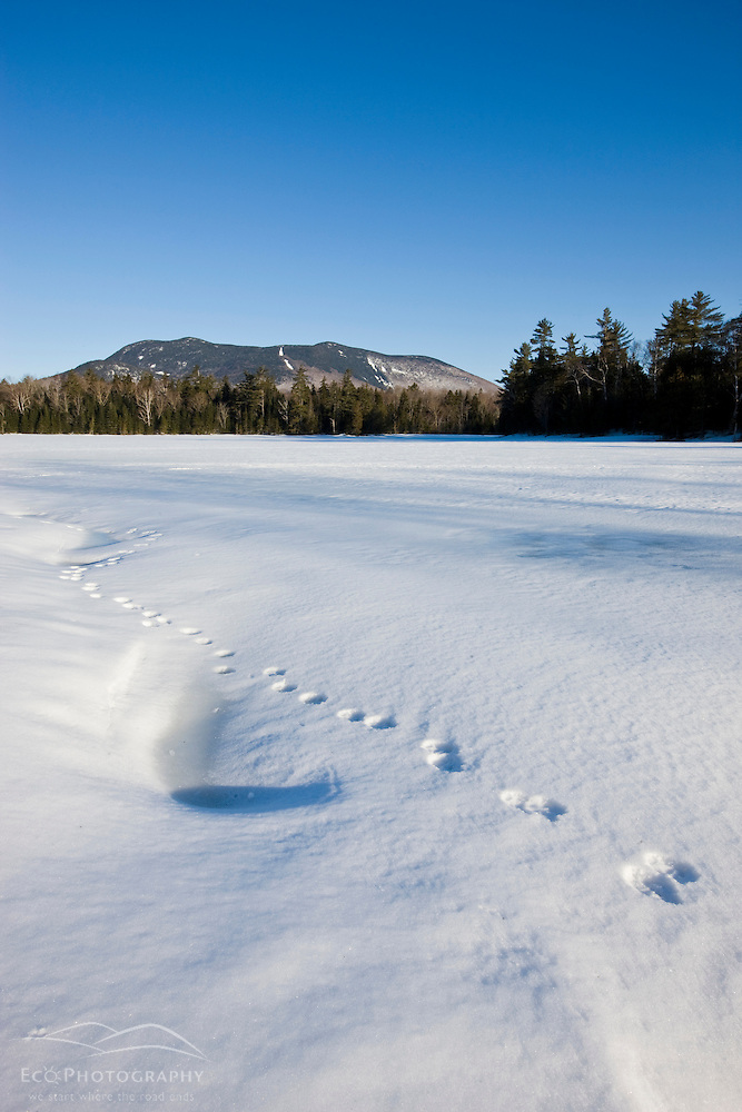 Animal tracks on a frozen pond near Little Lyford Pond Camps near Greenville, Maine, Winter.  Baker Mountain is in the distance. (Jerry and Marcy Monkman)