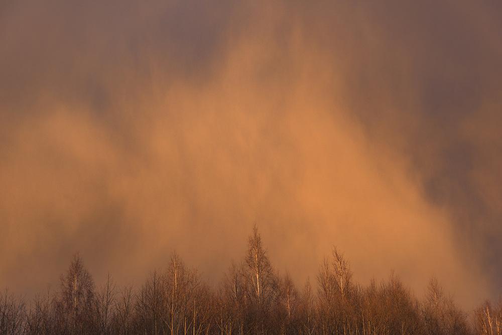 Sunlight from sunset shines over birch tops with bark blue clouds and falling snow over them, near Aloja, Latvia Ⓒ Davis Ulands | davisulands.com (Davis Ulands/Ⓒ Davis Ulands | davisulands.com)