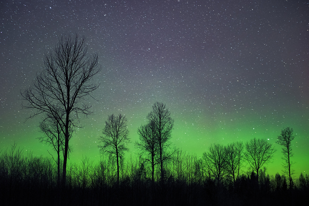 The green of northern lights and aspen silhouettes, Northern Vidzeme, Latvia Ⓒ Davis Ulands | davisulands.com (Davis Ulands/Ⓒ Davis Ulands | davisulands.com)
