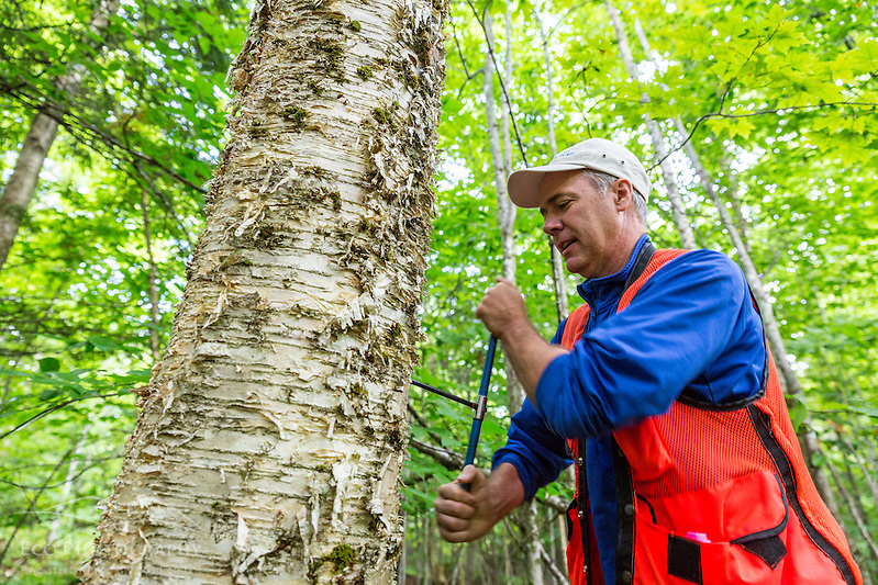 Brian Dangler of The Conservation Fund takes a core sample from a tree in the East Grand Lake forest in Weston, Maine. (Jerry and Marcy Monkman)