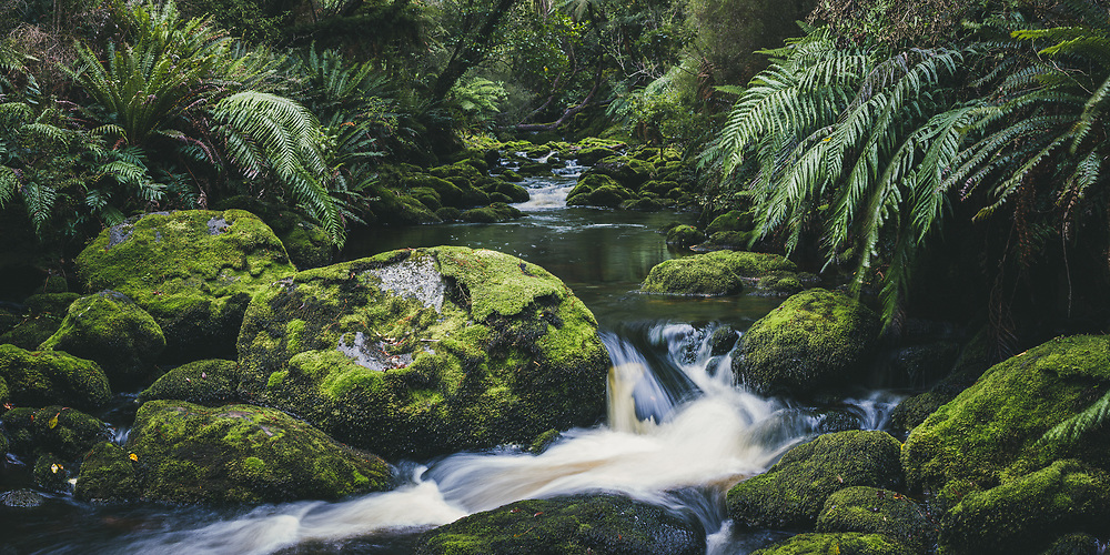 Nameless Creek | One of many rivulets and streams, Stewart Island, New Zealand (Davis Ulands/Ⓒ Davis Ulands | davisulands.com)