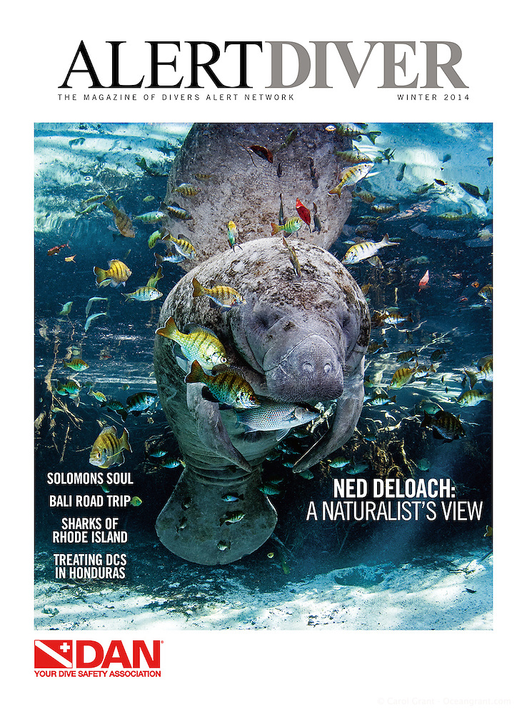 Winter 2014 cover of Alert Diver Magazine, Dan.org. Manatee surrounded by fish photograph by Carol Grant, oceangrant.com. (Carol Grant)