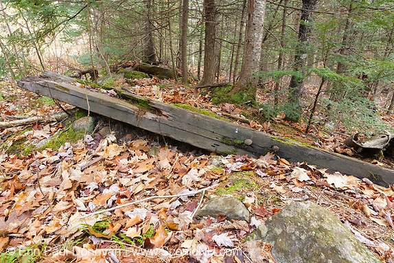 Railroad tie along the Beebe River Road, near logging Camp 2, in Campton, New Hampshire USA. This area was part of the Beebe River logging Railroad (1917-1942).