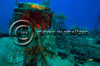 Soft Corals on the Bow, Oro Verde, Shipwreck, Grand Cayman (Steven Smeltzer)