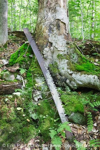 Logging era artifacts (two-man crosscut saw) along the Gordon Pond Railroad in Kinsman Notch of New Hampshire. This was a logging railroad in operation from 1905-1916.