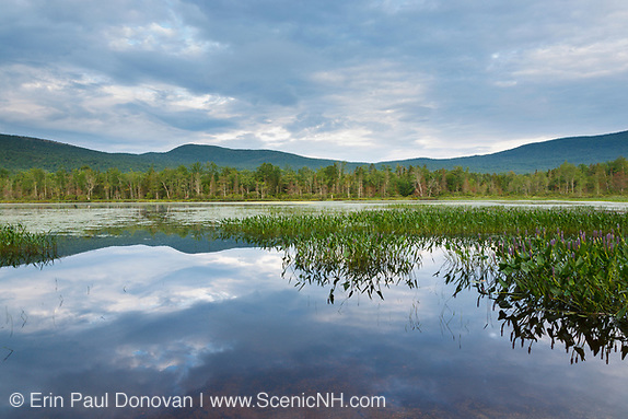 Elbow Pond during the summer months in Woodstock, New Hampshire. Species of fish in this pond include chain pickerel, yellow perch and smallmouth bass. This area was part of the Gordon Pond Railroad, which was a logging railroad in operation from 1905-1916.