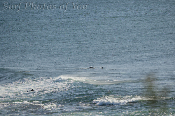 $45.00, South Narrabeen, 31 July 2020, Surf Photos of You, @surfphotosofyou, @mrsspoy, ($45.00, South Narrabeen, 31 July 2020, Surf Photos of You, @surfphotosofyou, @mrsspoy,)