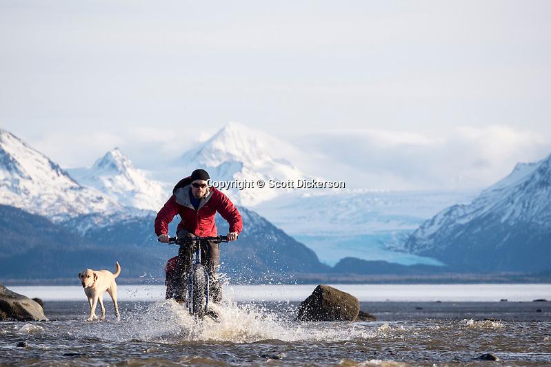 Carl Seger crosses a stream on his fat tire bike on the beach at the edge of Kachemak Bay near Homer, Alaska during an unseasonably warm winter day. (Scott Dickerson)